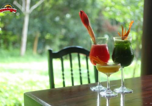 Cafe duoi tan rung (3)