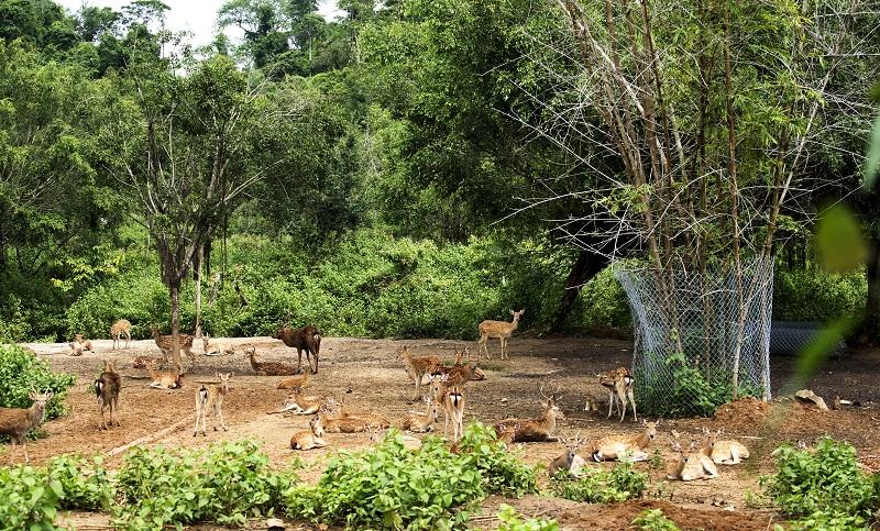 Zoo - Henri (1)