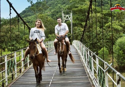 Horse Riding - Henri (1)