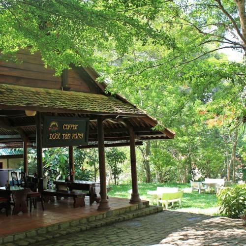 Cafe duoi tan rung (1)