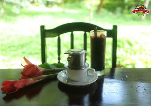 Cafe duoi tan rung (4)